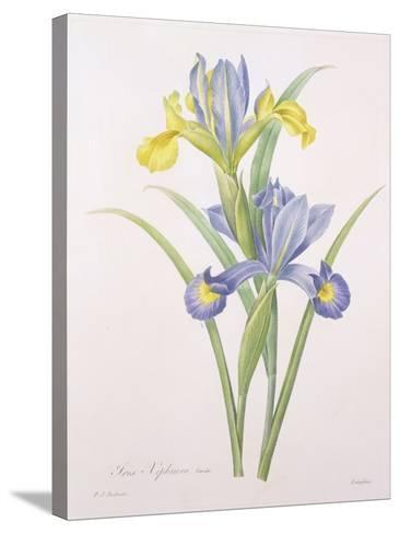 Iris Xiphium, Variety, Engraved by Langlois, from 'Choix Des Plus Belles Fleurs', 1827-Pierre-Joseph Redout?-Stretched Canvas Print