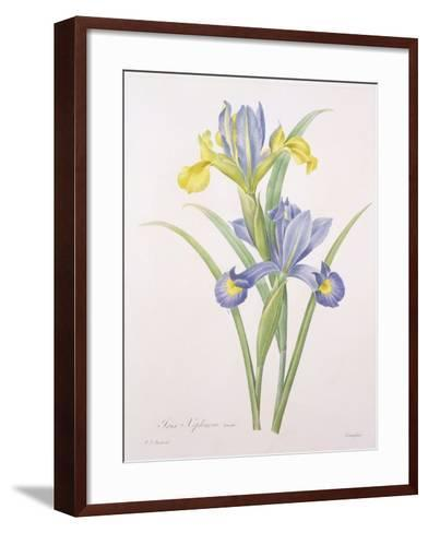 Iris Xiphium, Variety, Engraved by Langlois, from 'Choix Des Plus Belles Fleurs', 1827-Pierre-Joseph Redout?-Framed Art Print
