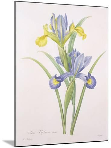 Iris Xiphium, Variety, Engraved by Langlois, from 'Choix Des Plus Belles Fleurs', 1827-Pierre-Joseph Redout?-Mounted Giclee Print