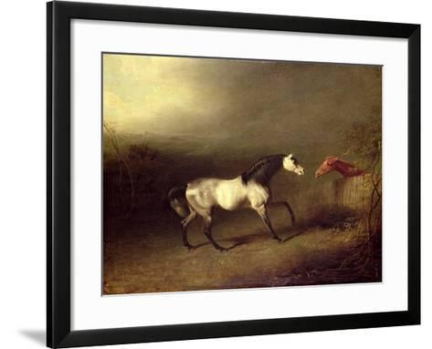 The Grey Arab-Sawrey Gilpin-Framed Art Print
