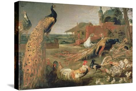 A Crow in Peacock's Feathers-Paul de Vos-Stretched Canvas Print
