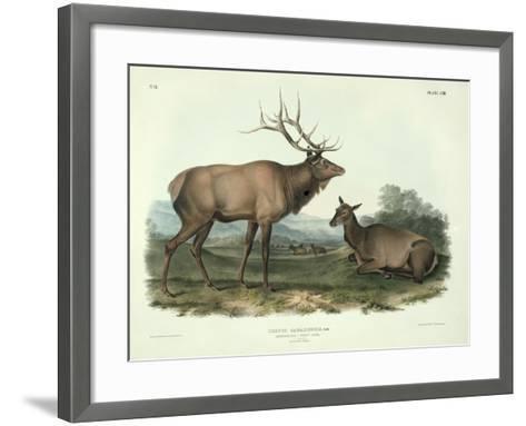 Cervus Canadensis (American Elk, Wapiti Deer), Plate 62 from 'Quadrupeds of North America',?-John James Audubon-Framed Art Print