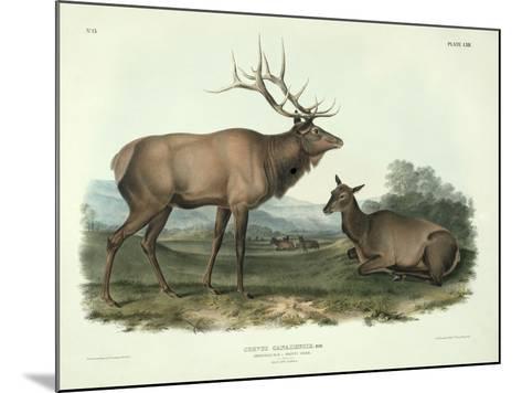 Cervus Canadensis (American Elk, Wapiti Deer), Plate 62 from 'Quadrupeds of North America',?-John James Audubon-Mounted Giclee Print