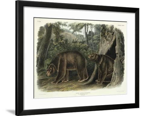 Ursus Americanus, Var. Cinnamonum (Cinnamon Bear), Plate 127 from 'Quadrupeds of North America',…-John Woodhouse Audubon-Framed Art Print