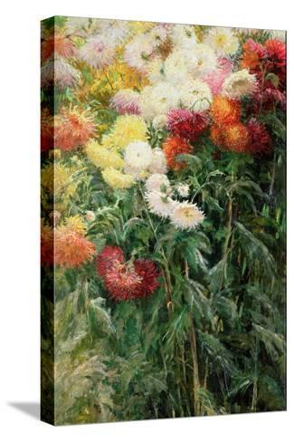 Clump of Chrysanthemums, Garden at Petit Gennevilliers, 1893-Gustave Caillebotte-Stretched Canvas Print