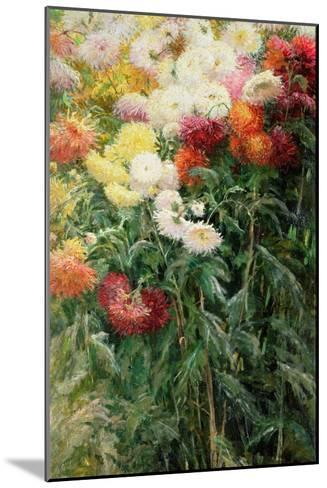 Clump of Chrysanthemums, Garden at Petit Gennevilliers, 1893-Gustave Caillebotte-Mounted Giclee Print
