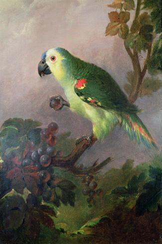 A Parrot-Jakob Bogdani Or Bogdany-Stretched Canvas Print