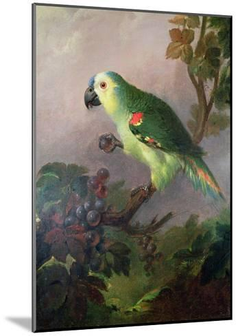 A Parrot-Jakob Bogdani Or Bogdany-Mounted Giclee Print