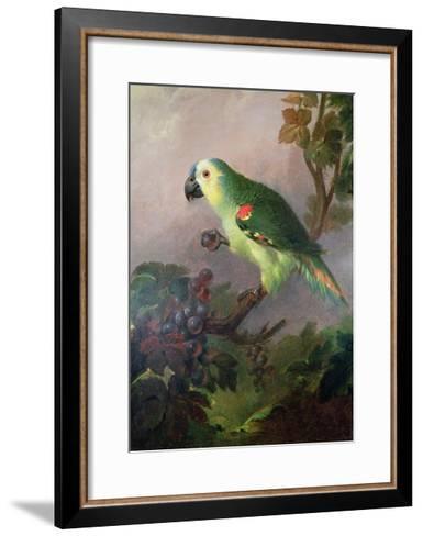 A Parrot-Jakob Bogdani Or Bogdany-Framed Art Print