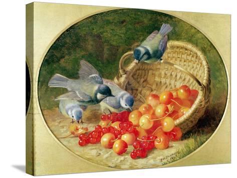 Bluetits Pecking at Cherries, 1897-Eloise Harriet Stannard-Stretched Canvas Print