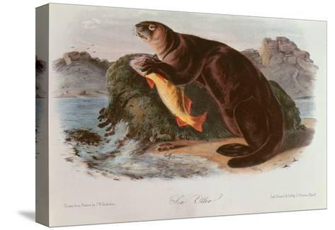 Sea Otter from Quadrupeds of North America (1842-5)-John James Audubon-Stretched Canvas Print