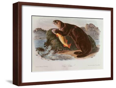 Sea Otter from Quadrupeds of North America (1842-5)-John James Audubon-Framed Art Print