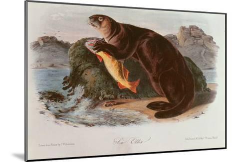 Sea Otter from Quadrupeds of North America (1842-5)-John James Audubon-Mounted Giclee Print