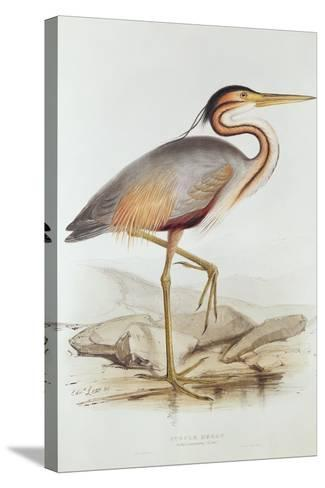 Purple Heron-Edward Lear-Stretched Canvas Print
