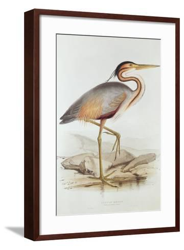 Purple Heron-Edward Lear-Framed Art Print