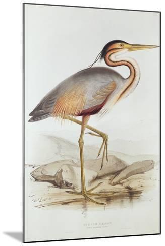 Purple Heron-Edward Lear-Mounted Giclee Print