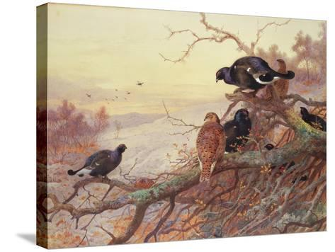 Blackgame in Winter-Archibald Thorburn-Stretched Canvas Print