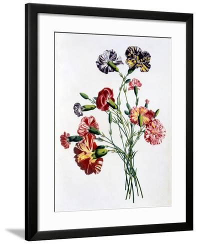 Bouquet of Carnations, from 'Collection Des Fleurs Et Des Fruits D'Apres Nature', Published 1805-Jean-Louis Prevost-Framed Art Print