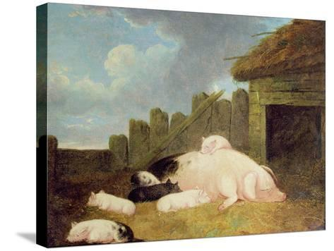 Sow with Piglets in the Sty-John Frederick Herring Jnr-Stretched Canvas Print