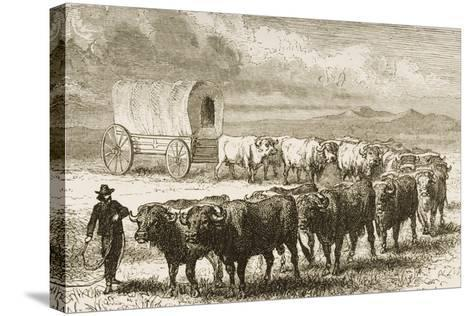 A Bullock Wagon Crossing the Great Plains Between St. Louis and Denver, C.1870, from 'American…--Stretched Canvas Print