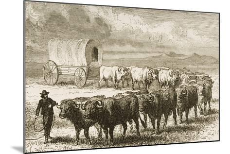 A Bullock Wagon Crossing the Great Plains Between St. Louis and Denver, C.1870, from 'American…--Mounted Giclee Print