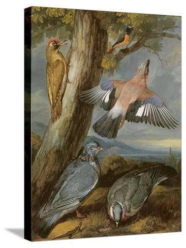 Jay, Green Woodpecker, Pigeons and Redstart, C.1650-Francis Barlow-Stretched Canvas Print