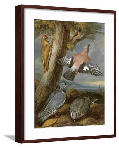 Jay, Green Woodpecker, Pigeons and Redstart, C.1650-Francis Barlow-Framed Art Print