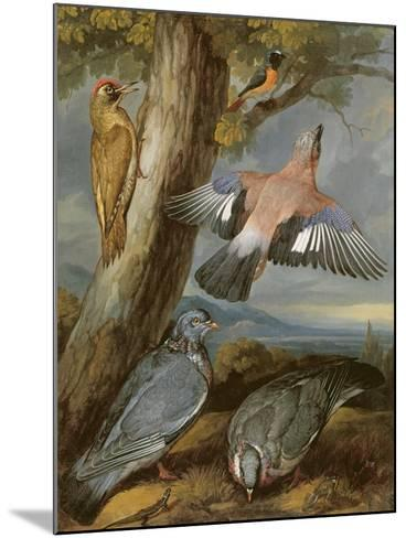 Jay, Green Woodpecker, Pigeons and Redstart, C.1650-Francis Barlow-Mounted Giclee Print