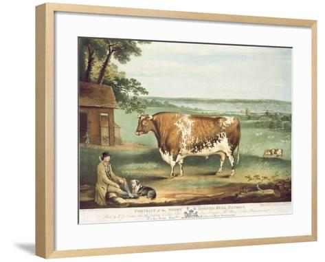A Short Horned Bull, Patriot, Engraved by William Ward, Shrewsbury, 1810-Thomas Weaver-Framed Art Print