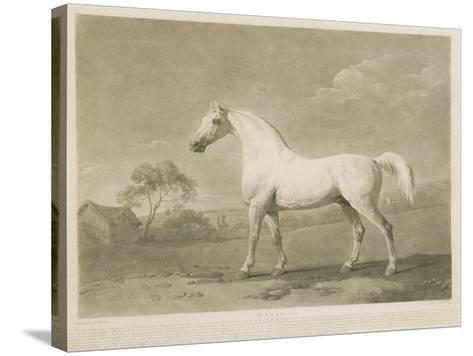 Mambrino, after George Stubbs, 1788-Charles Howard Hodges-Stretched Canvas Print