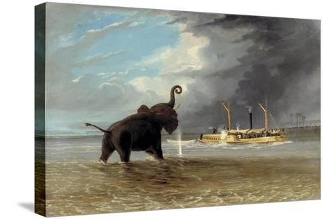 The 'Ma Roberts' and an Elephant in the Shallows, Lower Zambezi, 1859-Thomas Baines-Stretched Canvas Print