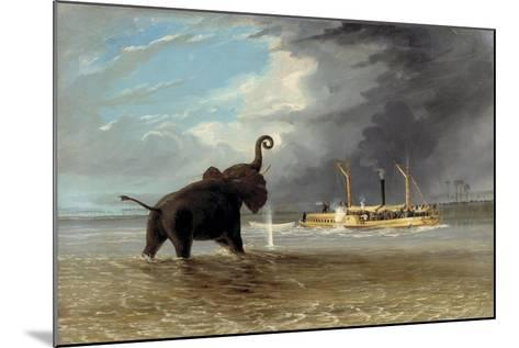 The 'Ma Roberts' and an Elephant in the Shallows, Lower Zambezi, 1859-Thomas Baines-Mounted Giclee Print