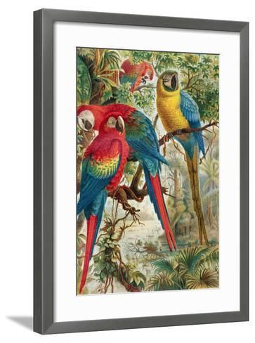 """Macaws, Plate from """"Brehms Tierleben: Allgemeine Kunde Des Tierreichs"""", Vol.5, P.60, Published by?-German School-Framed Art Print"""