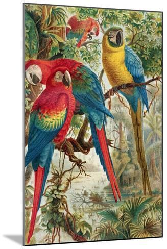 """Macaws, Plate from """"Brehms Tierleben: Allgemeine Kunde Des Tierreichs"""", Vol.5, P.60, Published by?-German School-Mounted Giclee Print"""