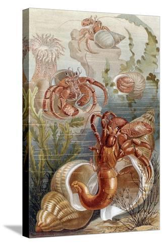 """Hermit Crabs, Plate from """"Brehms Tierleben: Allgemeine Kunde Des Tierreichs"""", Vol.10, P.38,…-German School-Stretched Canvas Print"""