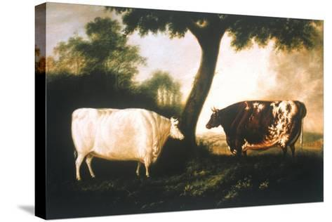 Two Shorthorn Cattle, 1806-Thomas Harrington Wilson-Stretched Canvas Print