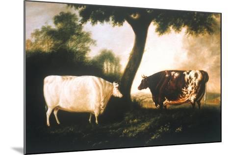 Two Shorthorn Cattle, 1806-Thomas Harrington Wilson-Mounted Giclee Print