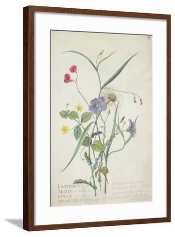 Lathyrus Nissolia, Chrysanthemum Leucanthemum, Linum Perenne, Lysimackia Nemorum, 1767-Georg Dionysius Ehret-Framed Art Print