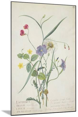 Lathyrus Nissolia, Chrysanthemum Leucanthemum, Linum Perenne, Lysimackia Nemorum, 1767-Georg Dionysius Ehret-Mounted Giclee Print