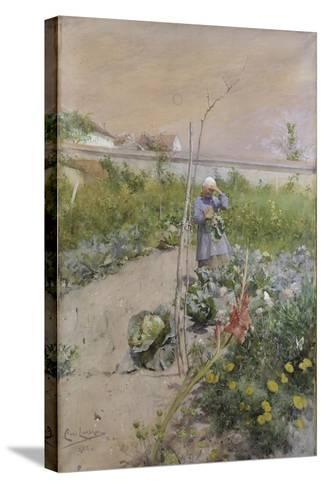 In the Kitchen Garden, 1883-Carl Larsson-Stretched Canvas Print