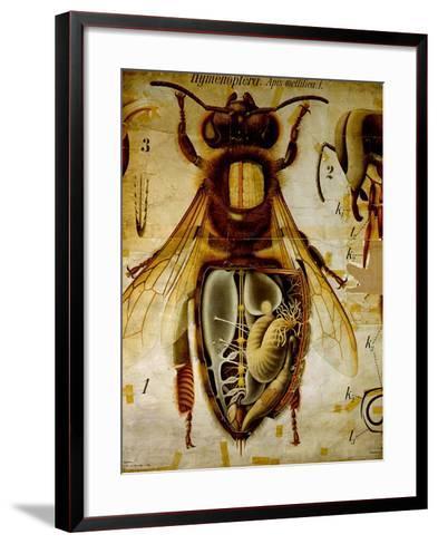 Anatomy of the Honey Bee, No.13, Pfurtscheller's Zoological Wall Chart-Paul Pfurtscheller-Framed Art Print