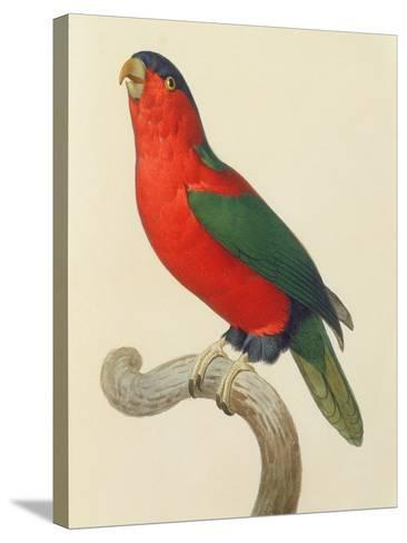 Purple-Naped Lory-Jacques Barraband-Stretched Canvas Print