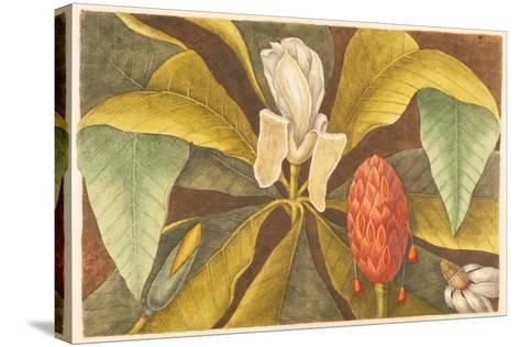 The Magnolia, Plate 68, Vol. 1 from the 'Natural History of Carolina, Florida and the Bahamas'-Mark Catesby-Stretched Canvas Print