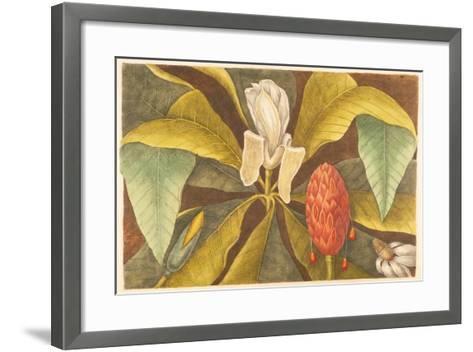 The Magnolia, Plate 68, Vol. 1 from the 'Natural History of Carolina, Florida and the Bahamas'-Mark Catesby-Framed Art Print