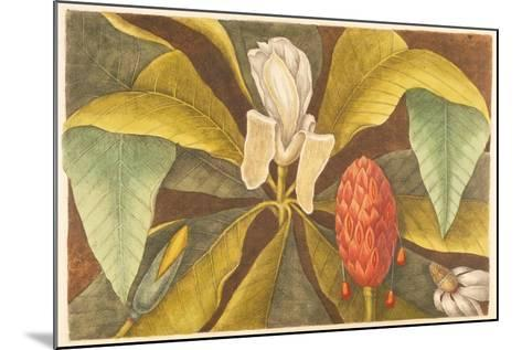 The Magnolia, Plate 68, Vol. 1 from the 'Natural History of Carolina, Florida and the Bahamas'-Mark Catesby-Mounted Giclee Print