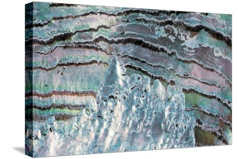 Abalone Shell--Stretched Canvas Print