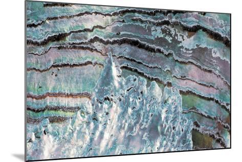 Abalone Shell--Mounted Photographic Print