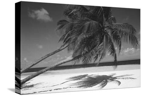 Palm Tree Shadow on Sand--Stretched Canvas Print