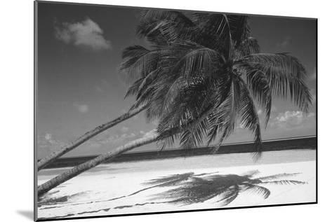 Palm Tree Shadow on Sand--Mounted Photographic Print