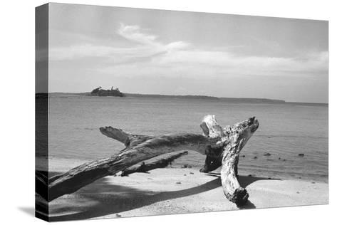Form of Tree Trunk at Beach--Stretched Canvas Print